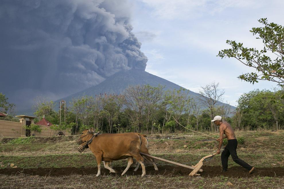 epaselect epa06351209 A Balinese farmer works on his farm as the Mount Agung volcano spews volcanic ash in Karangasem, Bali, Indonesia, 26 November 2017. According to reports from the Energy and Mineral Resources Ministry's Volcanology and Geological Hazard Mitigation Center (PVMBG), the volcano has erupted and is spewing an ash cloud more than 1,500 meters in height. The airlines Jetstar and Quantas have cancelled all flights to and from Bali as a result of the eruption.  EPA/MADE NAGI
